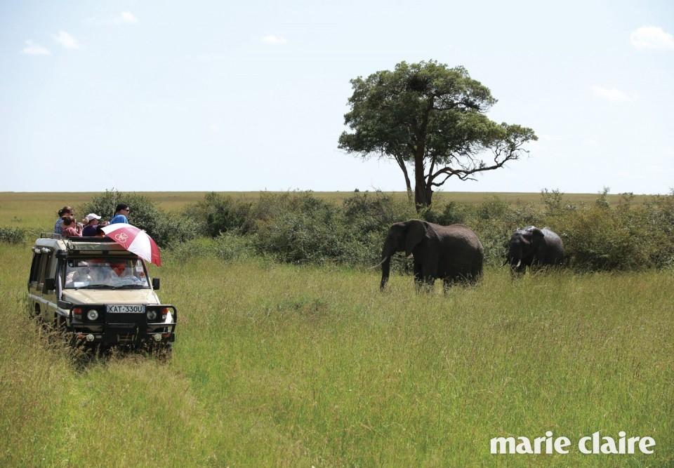 사파리 오프로드 현지에 있는 '켄코 사파리(Kenko Safari)' 여행사의 도움을 받았다. 호텔과 비행기 티켓, 사파리 투어 등 전체 일정을 함께 계획했다. 비용 사파리 투어 약 4백만원 포함 총 1천만원