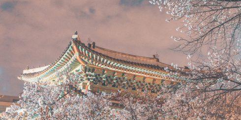 창경궁에 내려 앉은 봄. 절경이다. @picn2k