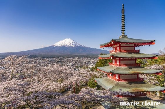 Fuji and red pagoda with cherry blossom at night