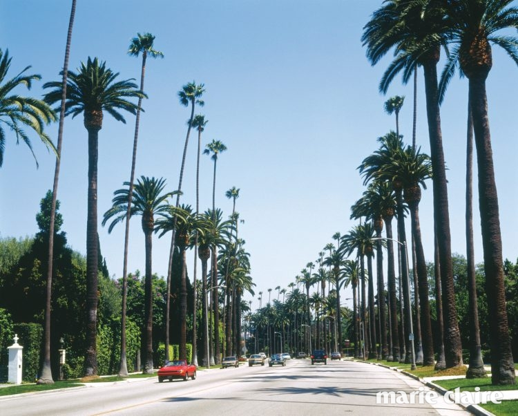Avenue with palms in Beverly Hills (USA)