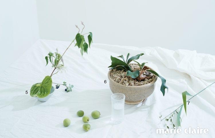 5 작은 꽃들을 한 송이씩 꽂기 좋은 수반에 클레마티스, 앤슈리엄, 블루베리를 담았다. 수반은 1304 플라워 스튜디오. 글라스는 이딸라. 6 에어 플랜트로도 키울 수 있는 박쥐란. 반음지에서 잘 자란다. 7 길쭉한 잎과 단단한 줄기 끝에 보리 이삭을 닮은 작은 열매가 열리는 유니폴라.