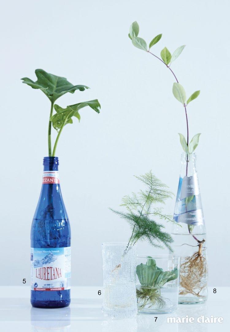5 수경 재배도 가능한 셀로움. 6 흙에서 키울 경우 줄기 끝에 아스파라거스 촉이 올라온다. 이국적인 잎사귀를 감상하고 싶다면 줄기를 조금 떼어내 재배를 해도 좋다. 7 연못이나 어항 등 물에 띄워 키우는 워터레터스. 8 덩굴과 식물인 인동. 6~8월 사이 꽃을 피운다.