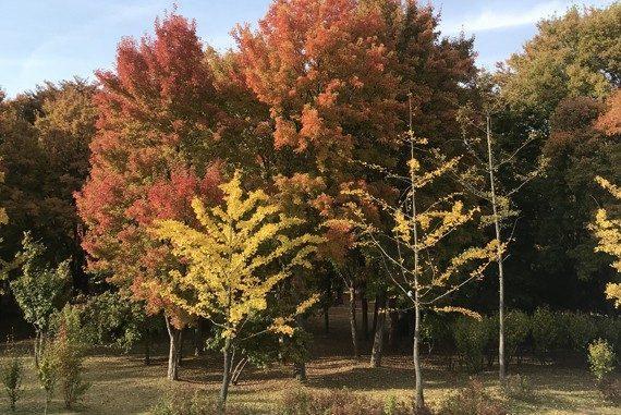 가을 단풍 산책길