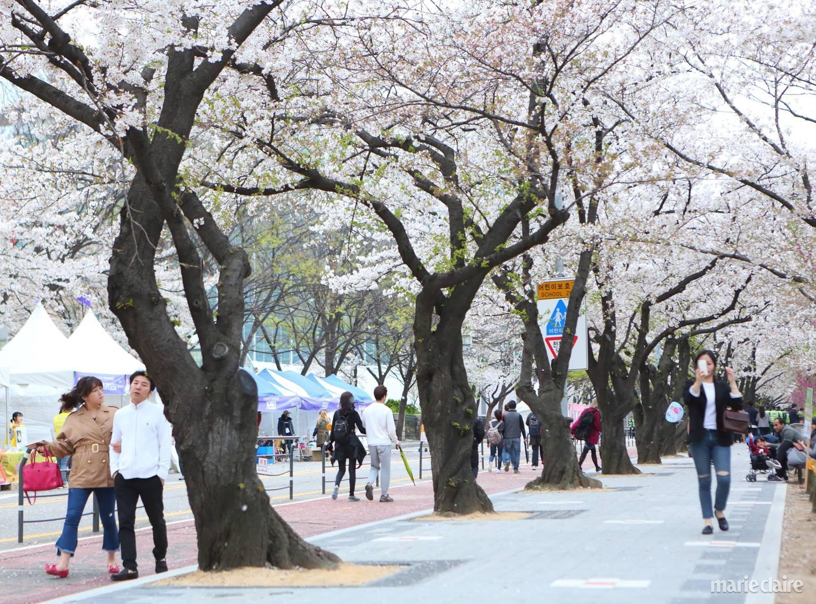 봄 여행 꽃
