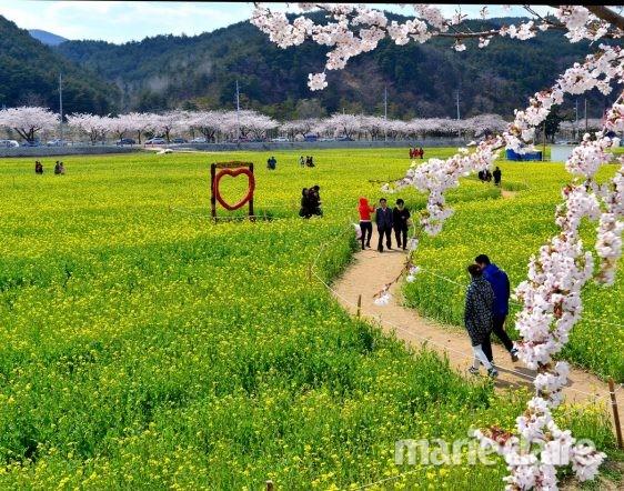 봄 여행 강릉