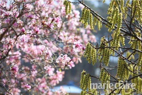 봄 여행 태안