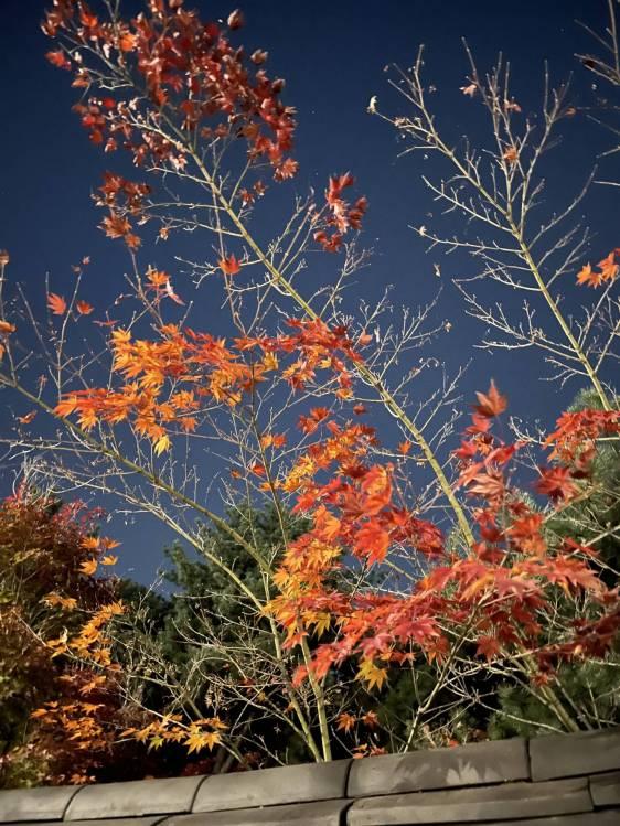 아이폰12프로 아이폰12프로 나이트모드 나이트모드촬영 낙엽 단풍촬영 shotwithiphone